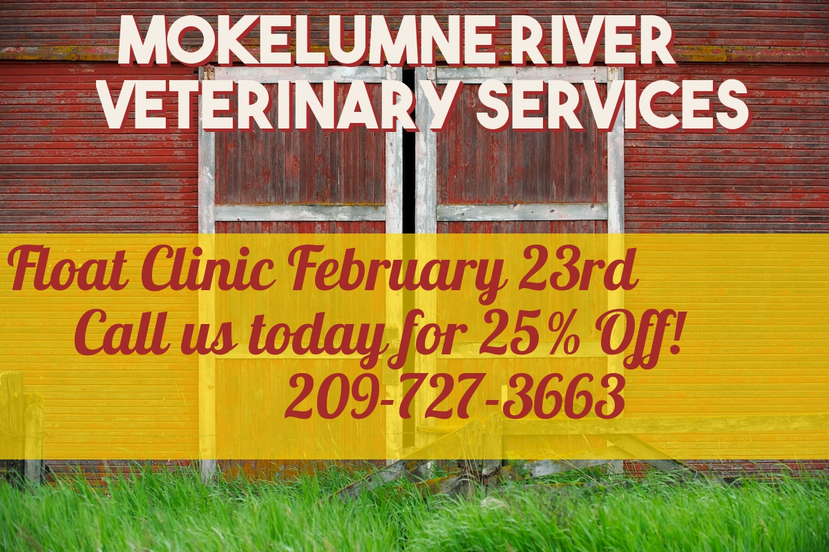February 2019 Equine Promotion! 25% OFF FLOAT CLINIC!
